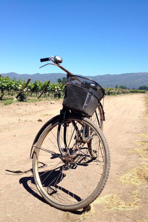 A bike in front of vines