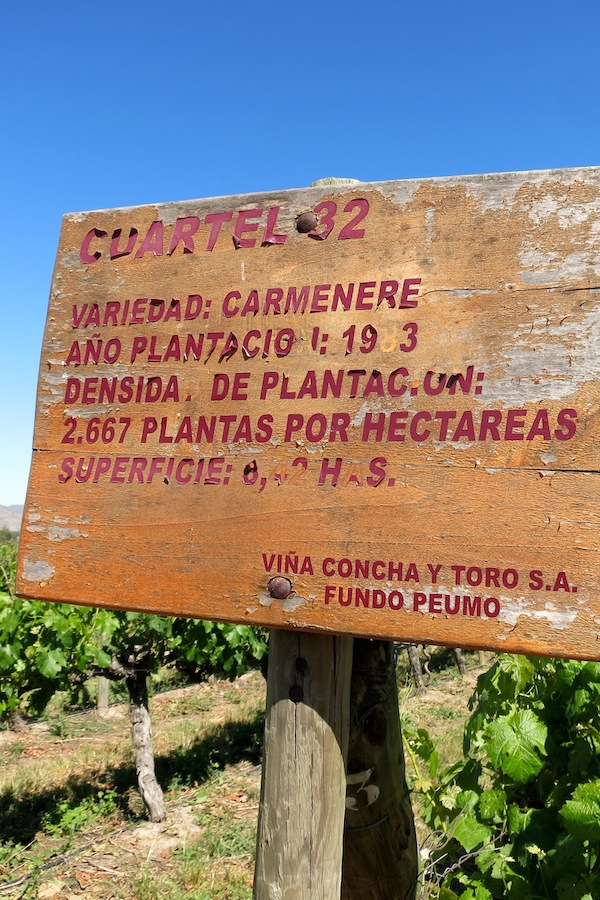 Sign on Carmenere vineyard in Chile