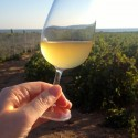 Glass of Barraco Vignammare Grillo 2012 by the Western Sicilian sea